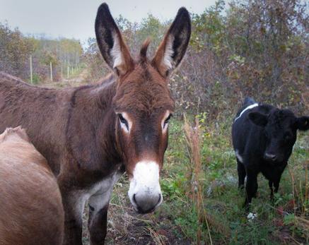 guardian_donkey