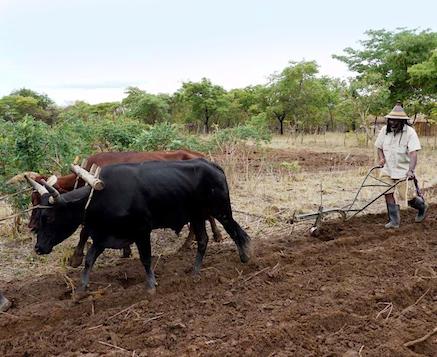Saki_Mafundikwa_Rasta_farmer
