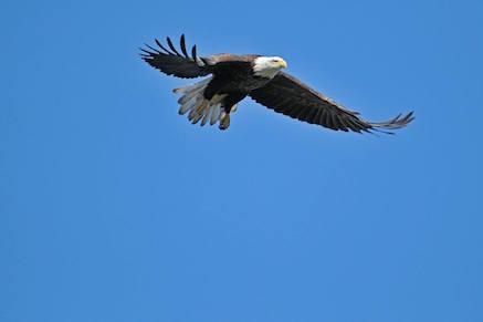 NR_eagle
